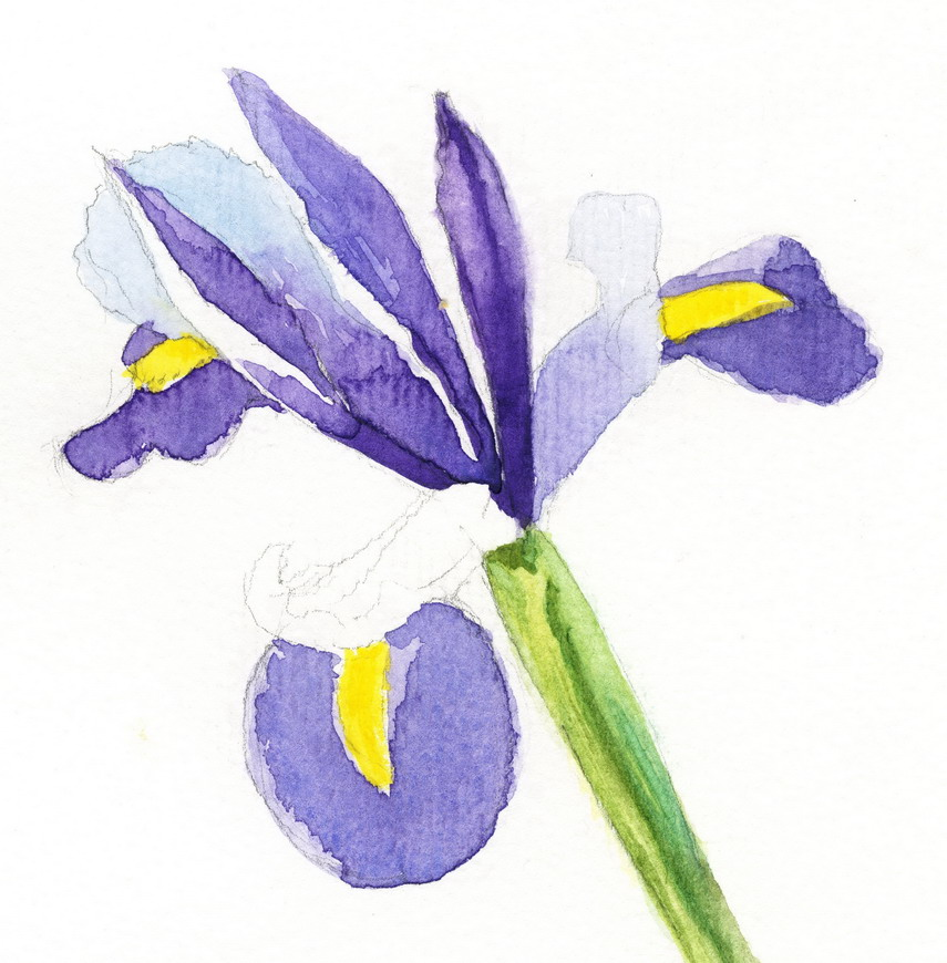 Iris Flower Painting Iris Watercolor Painting