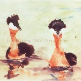 """Red Necked Grebes"""