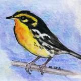 """Blackburnian Warbler"""