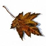"""""""Brown Leaf"""""""