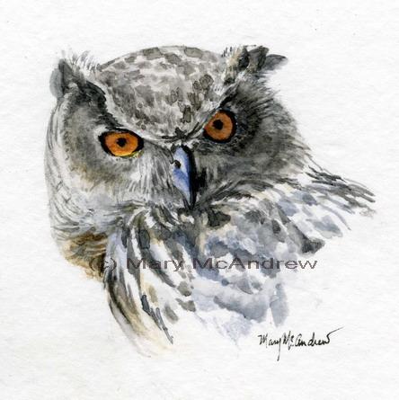 """Eurasian Eagle Owl"""