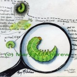 """Green Catapillar"" - watersoluble ink pencils"