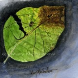 """Harvestman Spider on a Leaf"""