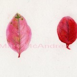 """Pink and Green Leaves"""