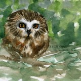 """""""Saw Whet Owl"""" 1"""