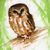 """""""Saw Whet Owl"""" 2"""