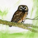 """""""Saw Whet Owl"""" 3"""