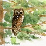 """""""Saw Whet Owl"""" 4"""
