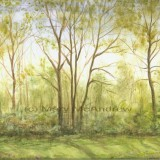 """""""Treeline in Spring"""""""