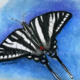 """""""Zebra Swallowtail Butterfly"""""""