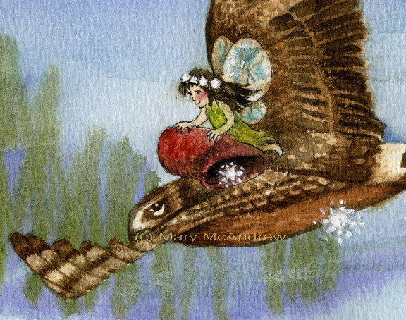 """Fairy Hawk Close Up"""