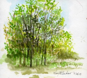 cmay trees 2 72dpi 300x271 Spring Watercolor + Watercolor Pencil Sketches 5 12 09