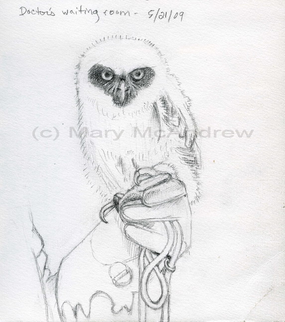 """Spectacled Owl Sketch"""