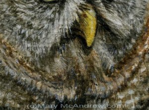 Great Grey Owl close up detail stage 3