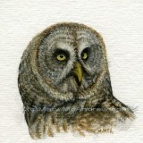 """Great Grey Owl"" (m)"