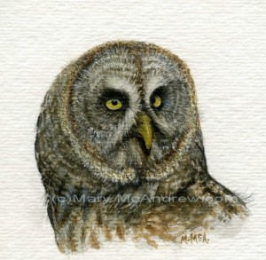 """Great Grey Owl"""