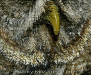 Great Grey Owl -close up detail finished