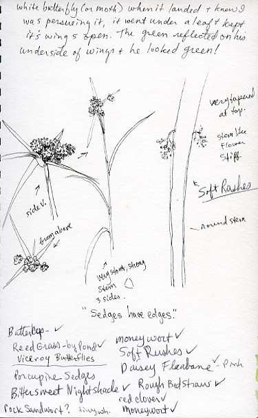 field-study-grasses