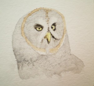 """Great Grey Owl"" -first washes"