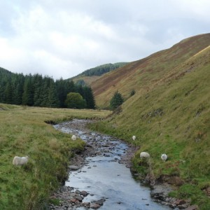 River Alwin into the Kidlandlee Dean