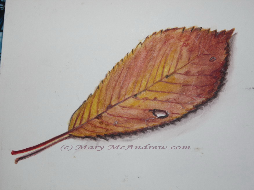Autumn Maple Leaves watercolor painting - Zeh Original Art Blog