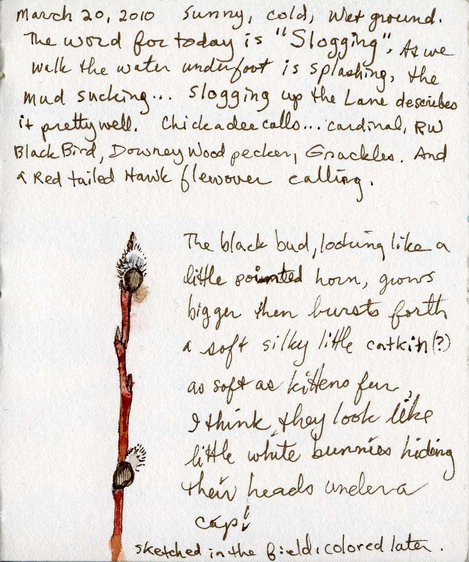 3-20-10 Notes in My Field Sketchbook
