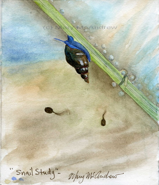 """Snail Study"" 4-23-2010"