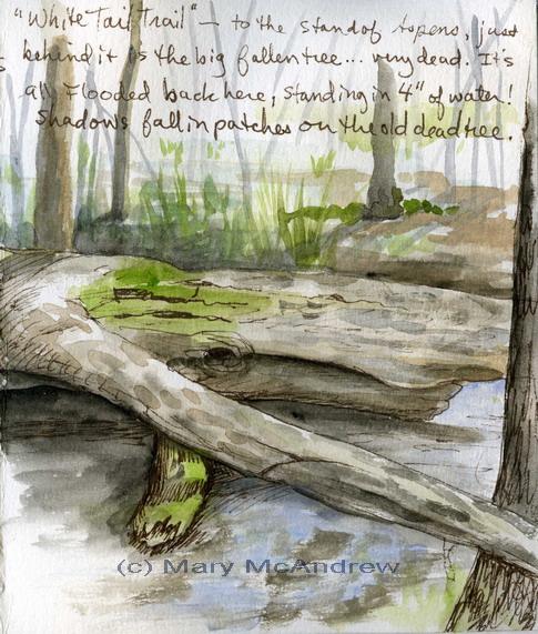 """The Wet Woods"" 4-23-2010"