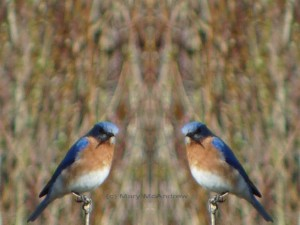 """Two Bluebirds with an Angel"""
