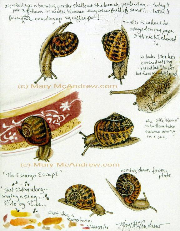 Snail Studies pg 1