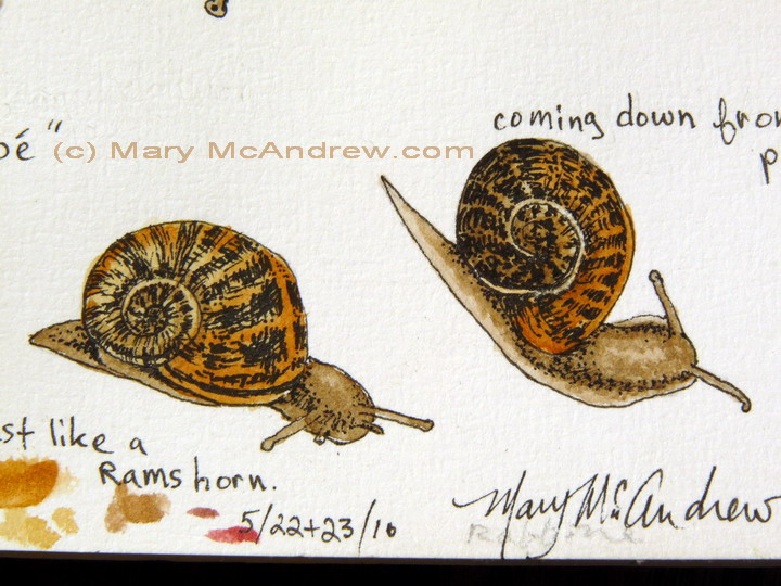 Close up of snail studies