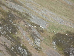 sheep on far hill-Zoomed in