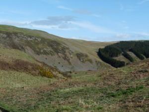 sheep on far hill