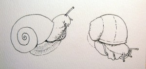 big snail stage 1- ink