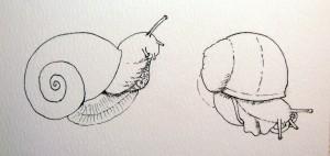 big snail stage 1- ink