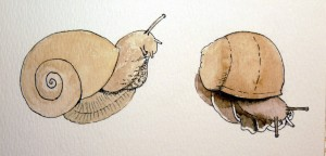 big snail stage 2