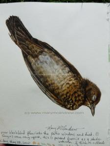 Dead Blackbird - stage 6