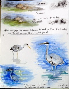 Studies of Grey Heron