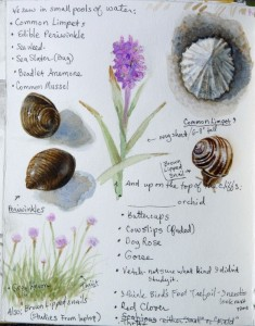 Shell and Flower studies