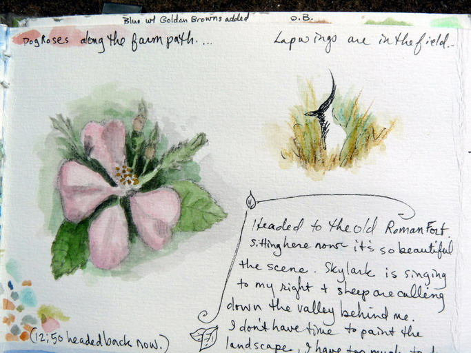 Dog Rose + Lapwing