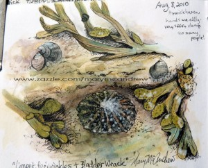 Z Limpets Periwinkle+Bladder Wrack clsup 300x242 Home