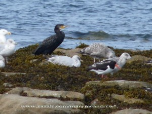 Cormorant + Friends