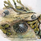 Limpets, Periwinkle and Bladder Wrack
