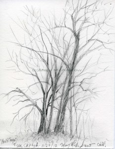 tree sketch (Paul's trees)