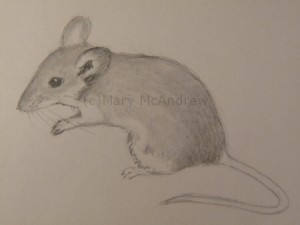Mouse 1 finished sketch