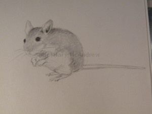 Mouse 2 finished sketch