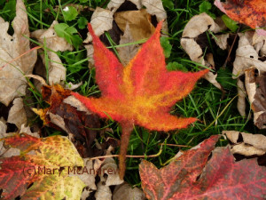 Maple leaf I made by wet felting wool.