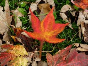 Maple leaf I made by wet felting wool.