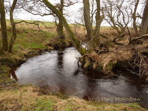 A walk along the burn in January.