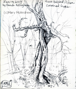 From my small sketchbook, I love the way these two trees were twisting together.